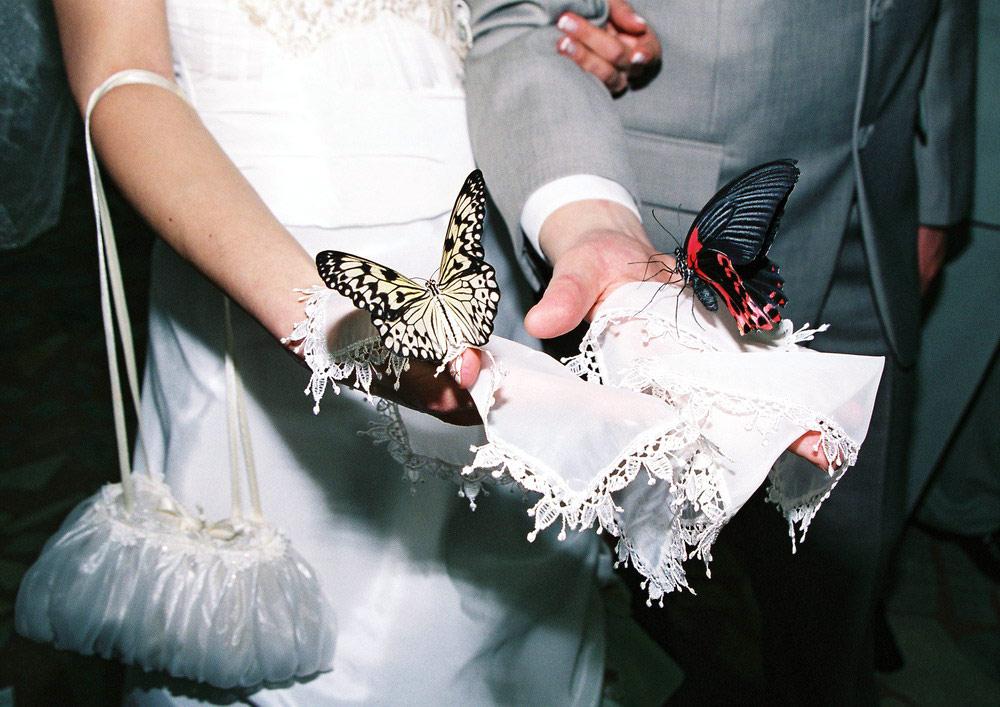 Как открыть свадебный подарок если его передали 69